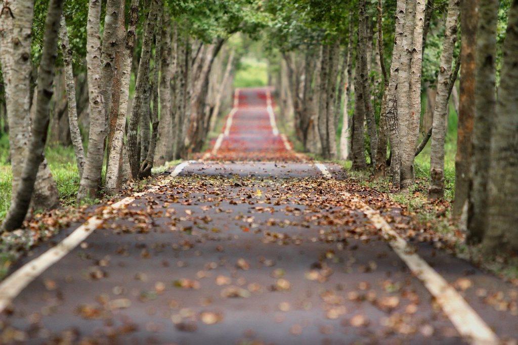 avenue, trees, road-656969.jpg